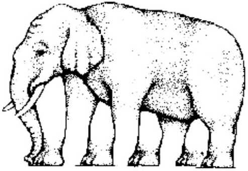 illusionelephant.jpg
